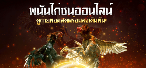 เว็บพนัน ไก่ชนไทย