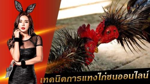 แทงไก่ไทย